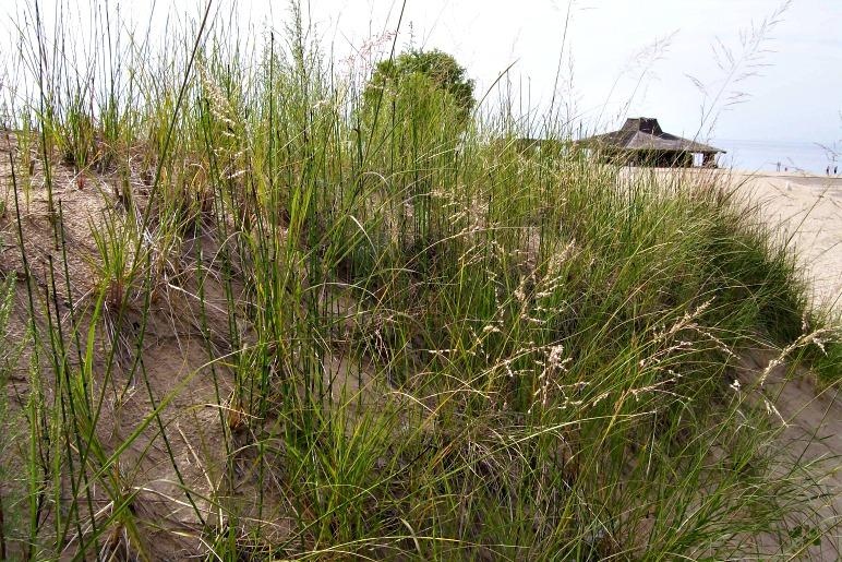 From dunes to beach-StowandTellu