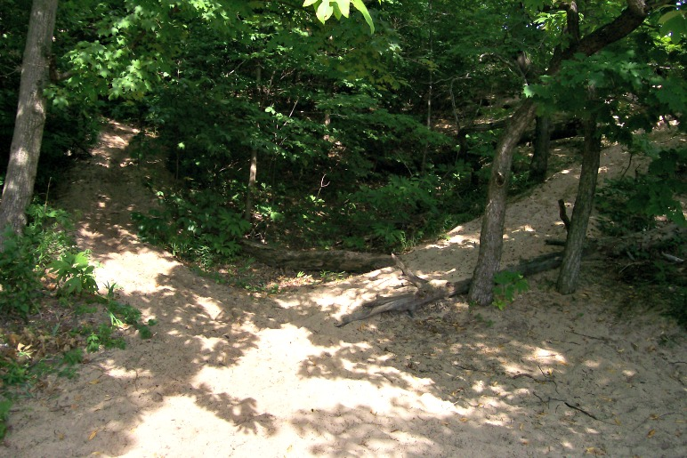 Trails through the trees-Warren Dunes-StowandTellu