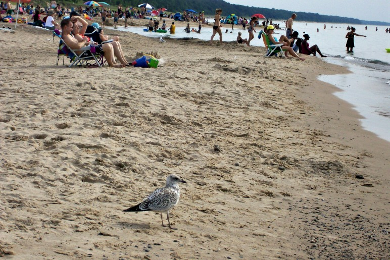 Warren Dunes-the beach-StowandTellU
