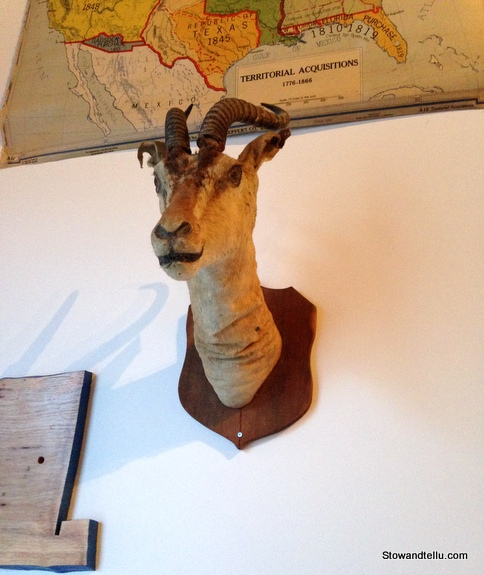 mounted-ungulate